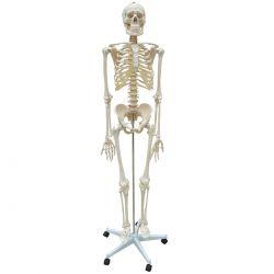 Esqueleto Humano 170 cm Suporte e Base com Rodas