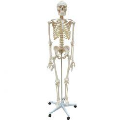 Esqueleto com Coluna Flexível 168cm com Suporte e Base com Rodas