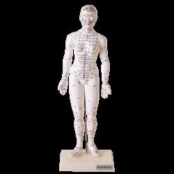 Modelo de Acupuntura de 50 cm Feminino